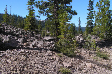Lassen NP - Devastated Area