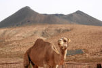 Fuerteventura 2005