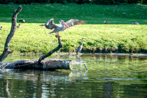 19.8. Tierpark Hagenbeck