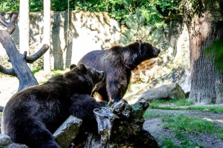 19.8. Tierpark Hagenbeck (XF50-140+TC1.4x @70mm, f/5.6, 1/200s, ISO 2000)
