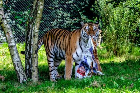 19.8. Tierpark Hagenbeck (XF50-140+TC1.4x @167mm, f/5.6, 1/200s, ISO 500)
