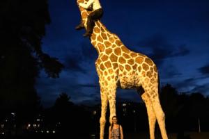 19.8. Hagenbeck-Giraffe