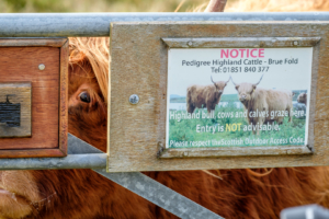 14.9.2016 - Highland Cows