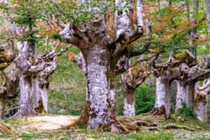 17.5.2017 - Hayedo de Otzarreta, Parque Natural de Gorbeia