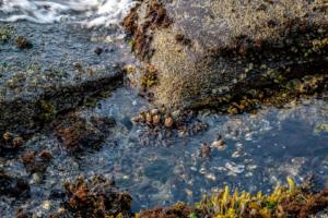 7.8.2017 - Salt Creak Recreation Area, Tide Pooling, Sea Barnicles