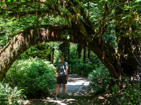 10.8.2017 - Olympic NP, Hoh Rain Forest, Hall of Mosses Trail