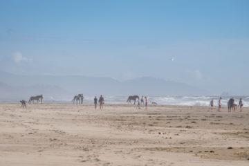 13.8.2017 - Nehalem Bay SP: Pferde am Strand