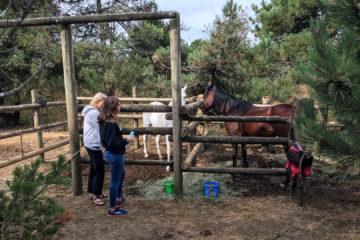 14.8.2017 - Nehalem Bay SP, Horse Campsites