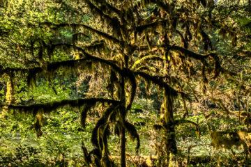 17.8.2017 - Paradise in Oregon, McKenzie River Trail