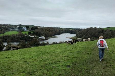 28.10.2017 - Helford Wanderung, Gillan River