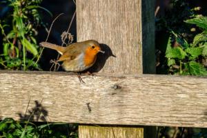 5.11.2017 - RSPB Lodmoor