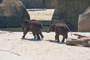 3.6.2010: Zoo Köln - Das waren bestimmt Bruder und Schwester ;-)))
