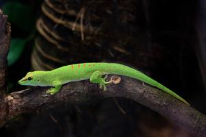 3.6.2010: Zoo Köln - Ein Gecko