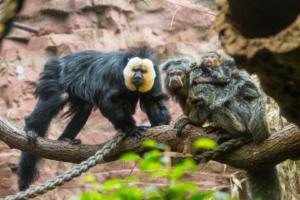 23.8.2013: Zoo Frankfurt