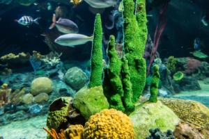 11.4.2014: Oceanarium