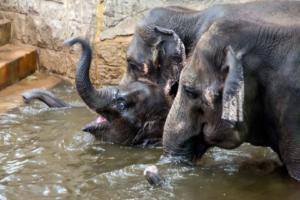 22.2.2015: Tierpark Friedrichsfelde - Elefanten