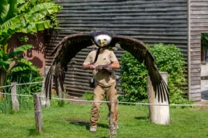 26.5.2018: Zoo Köln - Weißkopfseeadler