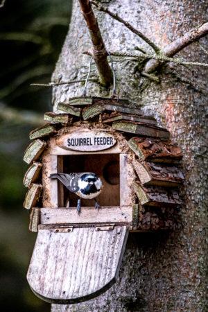 4.11.2018 - Bird Hide am Derwent Reservoir