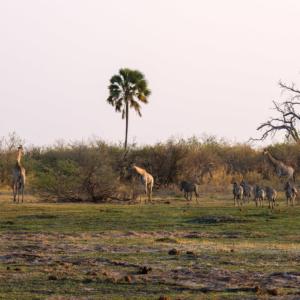 Afrika 2019 – Tiere & Landschaft