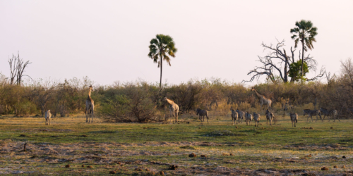 31.8.2019 - Kayak Tag 1, Evening Walk - Zebras und Giraffen