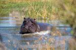 Afrika 2019: Kayaktour im Okavangodelta