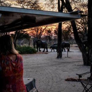 Afrika 2019 – Moremi, South Gate