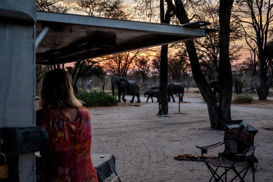 6.9.2019 - Moremi South Gate, Site 6 - Elefantenbesuch
