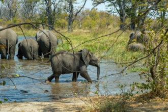 7.9.2019 - Moremi, Picknick Makerekwa - mit Elefantenbesuch