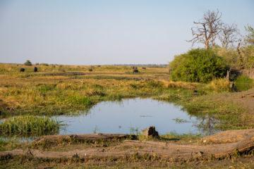 11.9.2019 - Linyanti Game Drive - Büffel und Elefanten