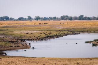 12.9.2019 - Chobe Riverfront - Waterbucks + Enten + Gänse