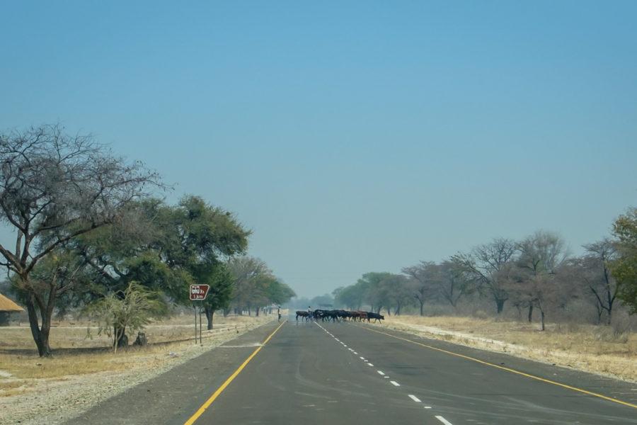 15.9.2019 - Katima -> Livingstone's Camp