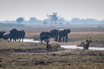 17.9.2019 - Buffalo Core Area - Elefanten, Kudus