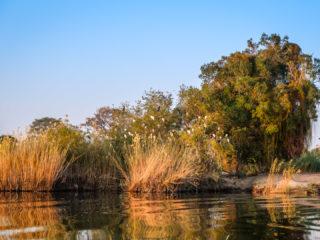 18.9.2019 - RiverDance, Sunrise Boat Tour - African Darters, Cattle Egrets, Reed Cormorants