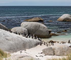 29.10. Pinguine am Boulders Beach