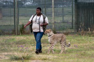 30.10. Cheetah Outreach - Gepardenstreicheln :-)