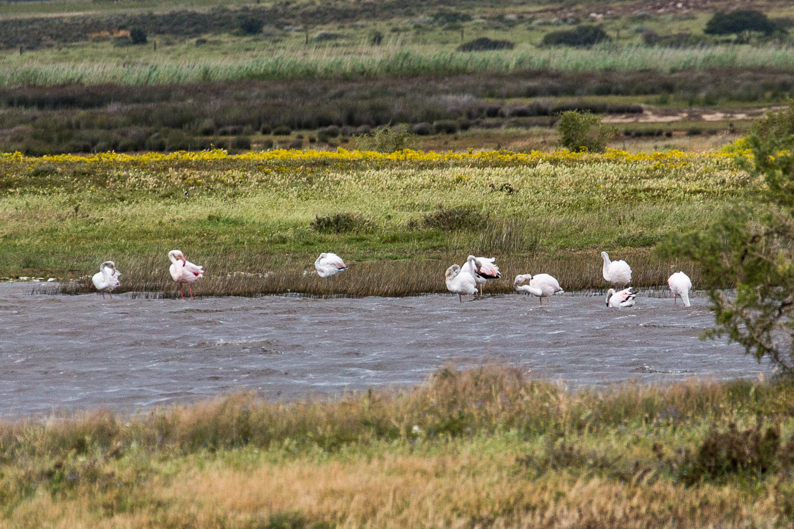 31.10. Cape Agulhas National Park. Flamingos.