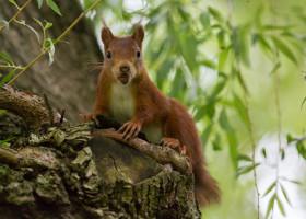 30.5.2012: unser Eichhörnchen :-)