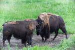 Rockies 2014: Yellowstone I