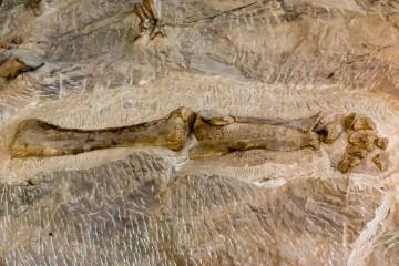 30.7. Dinosaur Quarry Visitor Center