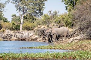 15.7. Zambezi Kayak Tour
