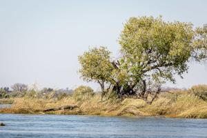 15.7. Zambezi Kayak Tour, Krokodil