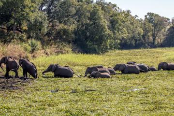 13.-15.7. Maramba River Lodge - die Elefanten wollen in die Lodge