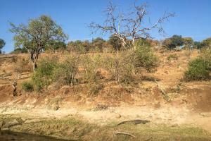 16.7. Chobe River Sunset Tour - Krokodil