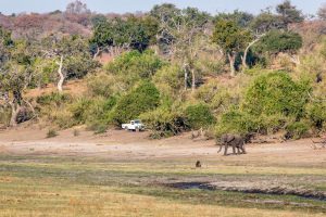 16.7. Chobe River Sunset Tour - River Front Drive