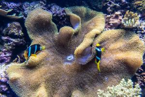 10.7. Denver Aquarium
