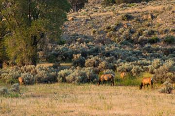 18.7. Elks am Boiling River