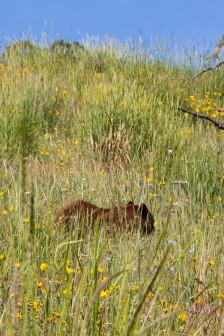 19.7. Beaver Ponds Trail - Black Bear ...