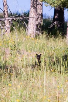 19.7. Beaver Ponds Trail ... mit Jungem :-)))