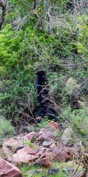 27.7. Ein Black Bear zum Frühstück !?!