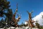 Westen 2012: Great Basin National Park